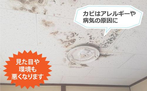雨漏りによるカビはアレルギーの原因にもなりえます