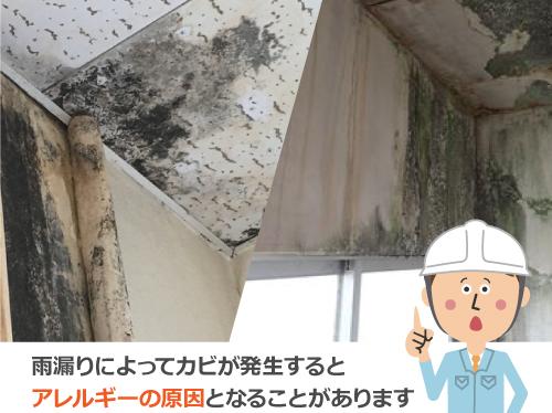 雨漏りによってカビが発生すると アレルギーの原因となることがあります