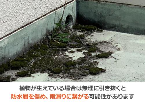植物を無理に引き抜くと防水層を痛め、雨漏りに繋がる可能性があります
