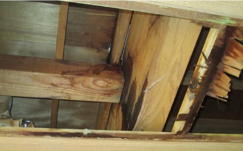 外壁材・内装材を剥がした目視点検