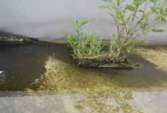 植物による防水層の破壊