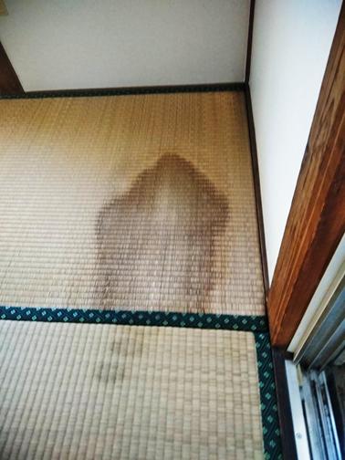 沼津市雨漏り瓦屋根室内畳