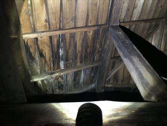 小屋裏のカビ