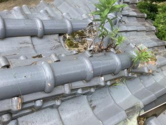 瓦屋根で植物の繁殖