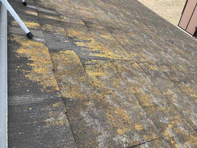 コケや藻が見られる屋根
