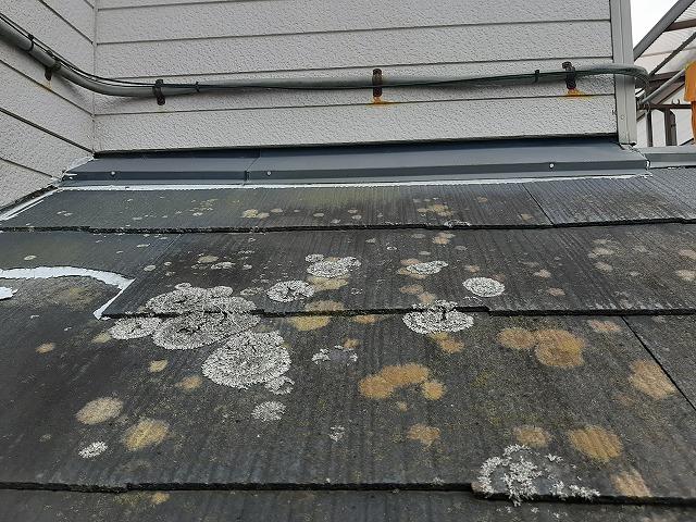 コケが発生している下屋根